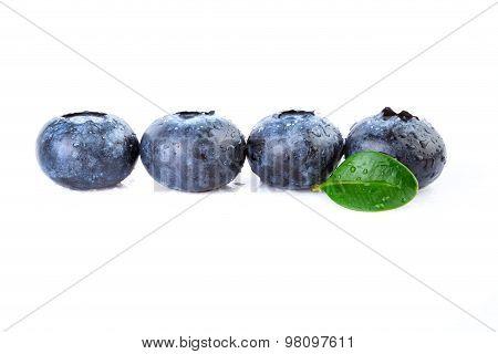 Fresh Blueberries Straight Line