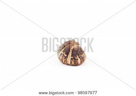 The Shiitake mushroom on the White background.