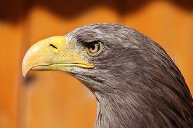 stock photo of eagles  - White - JPG