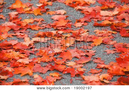 Autumn leaves carpet