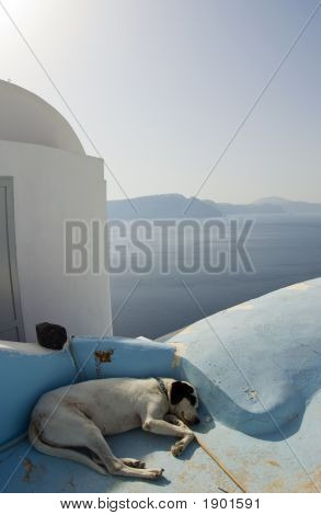 Dog Sleeping Greek Islands Over The Sea Santorini
