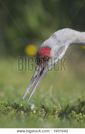 Feeding Crane