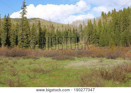 San Juan National Forest in Durango, CO
