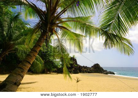 Palmtree At Tropical Beach
