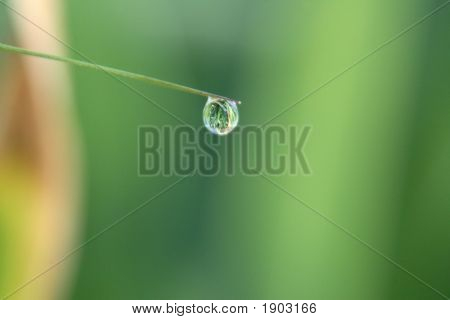 Small Dewdrop