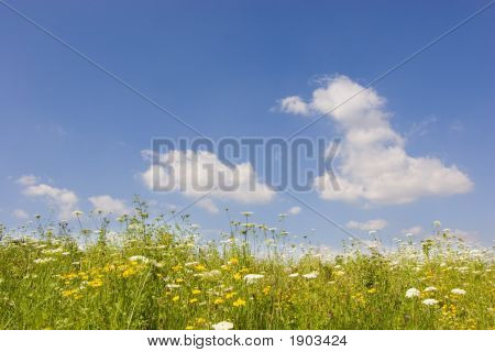 Summer Sky An Meadow