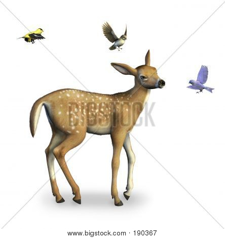 Fawn With Birds