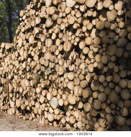Big Stack O F Logs