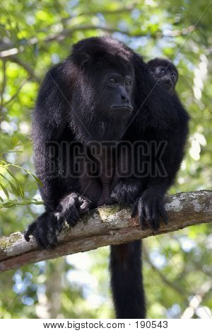 Monkey Mom