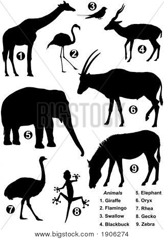 Nine Detailed Silhouettes Of Various Wild Animals