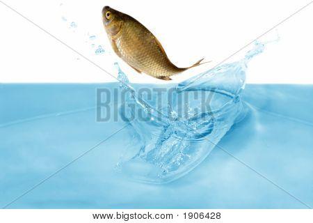 Peixe em salto
