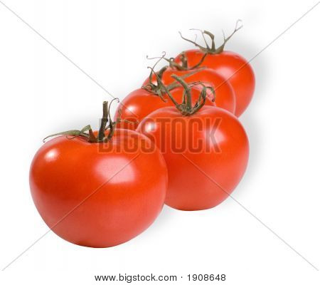 A Line Of Tomatoes
