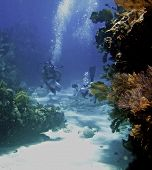 stock photo of coral reefs  - Underwater view of scuba divers swimming over coral reef off Florida Keys - JPG