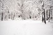 picture of winter scene  - Winter scene - JPG