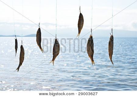 Drying Fish On The Background Sea