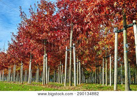 Garden And Park Tree Nurseries