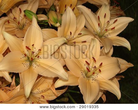 Yellow lillies bouquet