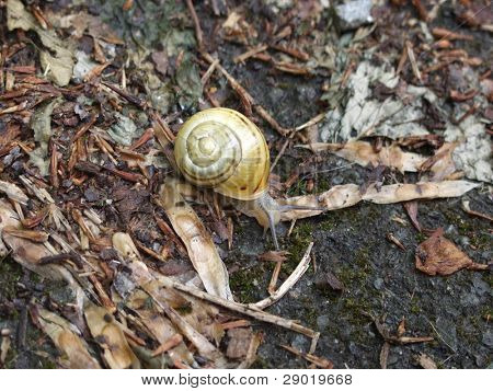 Little snail with yellow snail house
