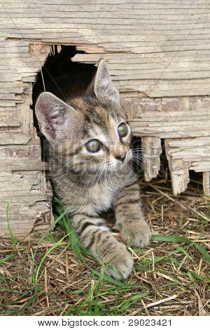 Small kitten peeking from the hole