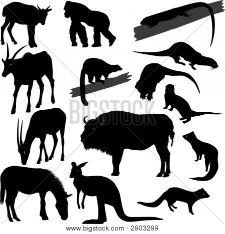 Silhouettes Of Different Animals