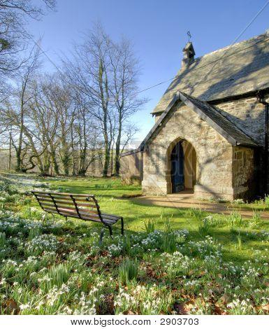 Snowdrops In A Churchyard