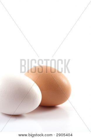 White Egg, Brown Egg