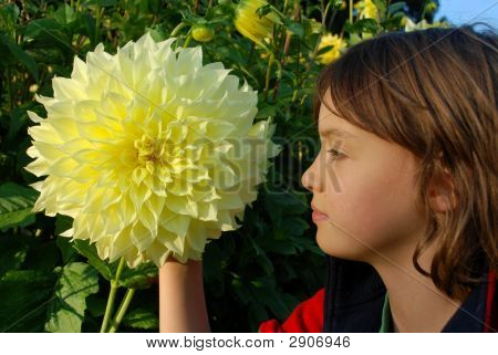 Child'S Profile And Giant Yellow Dahlia Close Up