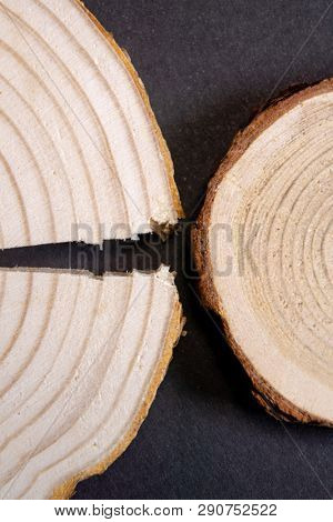 Cracked wood crosssection with annual