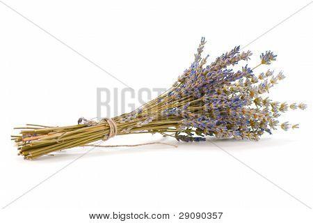 bouquet of cut lavender