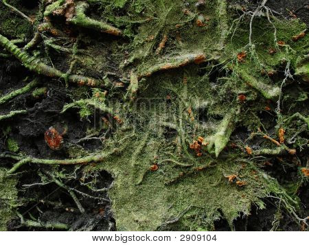 Root And Moss