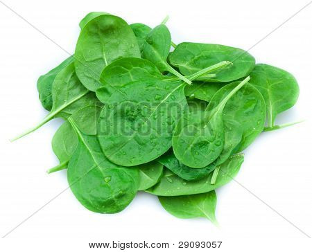 Baby spinach leaves