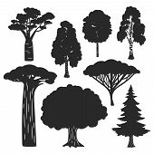 Vector Trees Forest Black Silhouettes Isolated On White Background. Birch And Oak, Evergreen Pine Si poster