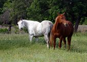 Photo of horses in pasture.