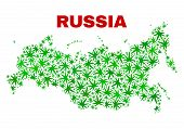 Vector Cannabis Russia Map Mosaic. Concept With Green Weed Leaves For Weed Legalize Campaign. Vector poster