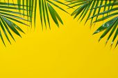 Green Leaves Of Palm Tree On Yellow Background. Flat Lay Minimal Nature Style Of Tropical Palm Leave poster