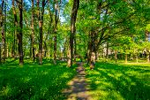 Spring Park Alley. Walkway In The Park. The Track Is In Green. Spring Path Among The Grass And Trees poster