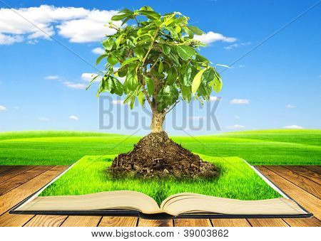 Tree growing from a book on wooden table. Concept of growth of knowledges from reading of books