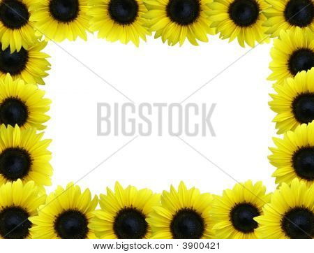 Sunflower Boarder