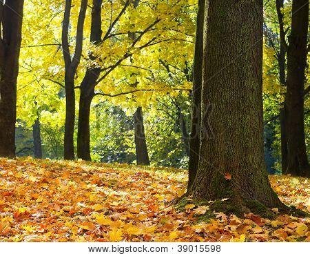 Sunbeams Pour Into The Autumn Park
