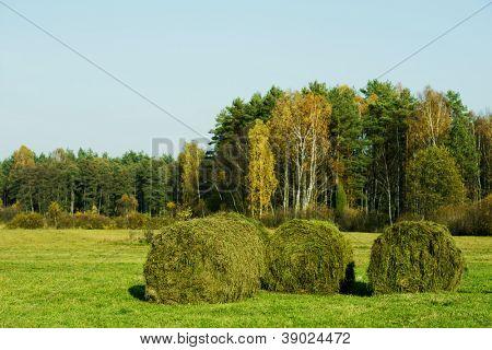 Fardos de feno na hora de cortar grama no campo