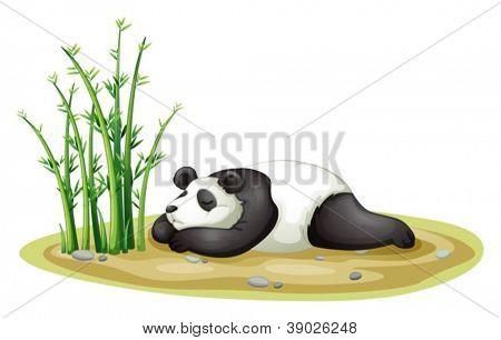 Ilustración de un panda rojo sobre un fondo blanco