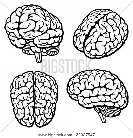 Human Brain. Set of four views. Vector Illustration