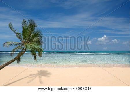 Strand mit einsamer Handflächenbaum