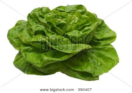 Butterhead Lettuce W/ Path.