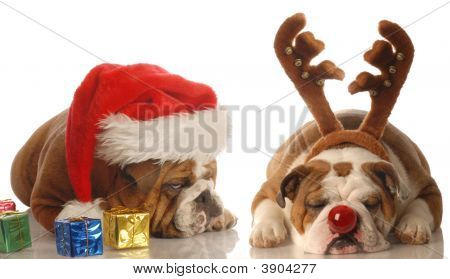 Bulldog Scrooge With