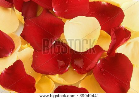 Background Of  Rose Petals