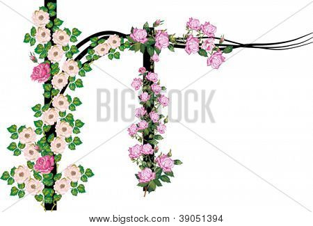 illustration with brier and rose flowers on posts