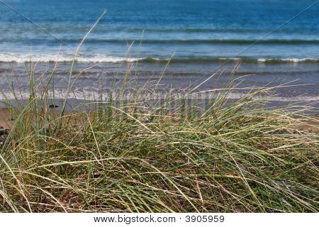 Tall Dune Grass