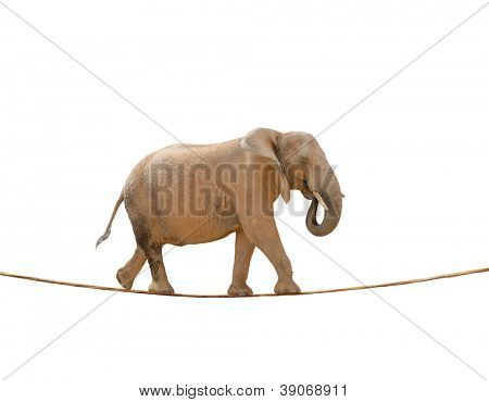 Elephant Walking On Rope On White Background