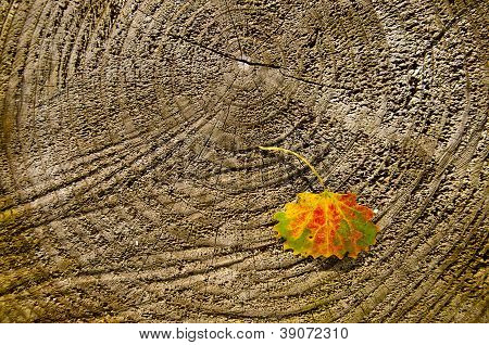 Autumn Asp Leaf On Wooden Background